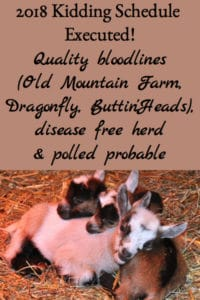 2018 Kidding Schedule Executed – Polled Goats Probable