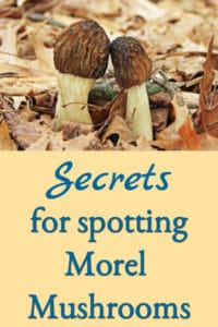 Secrets for Spotting Morel Mushrooms!