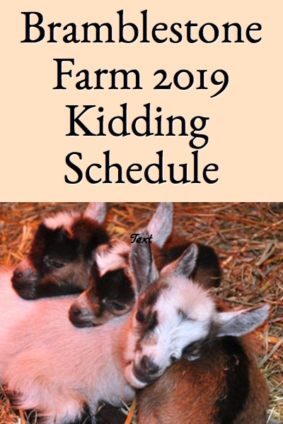 Bramblestone Farms 2019 Nigerian Dwarf Kidding Schedule