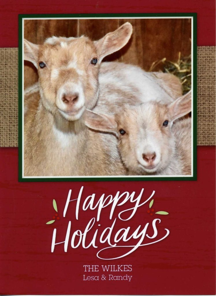 Happy Holidays from Bramblestone Farm