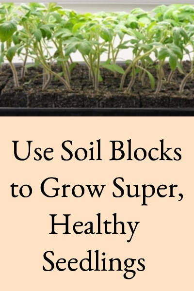 use soil blocks to grow super healthy seedlings