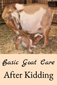 Basic Goat Care After Kidding