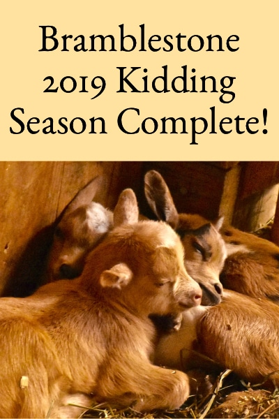 Bramblestone Farm 2019 Kidding Season Complete