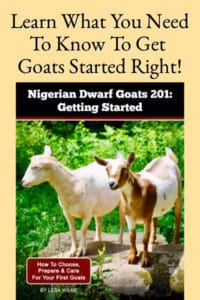 Nigerian Dwarf Goats 201: Getting Started