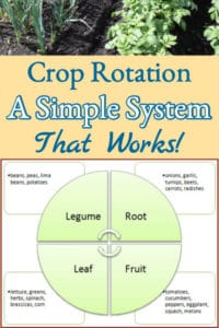 Garden Crop Rotation – A Simple System