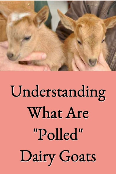 what are polled goats