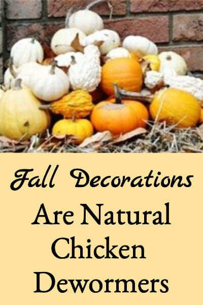 Fall Decorations Are Natural Chicken Dewormers