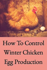 Control Chicken Winter Egg Production