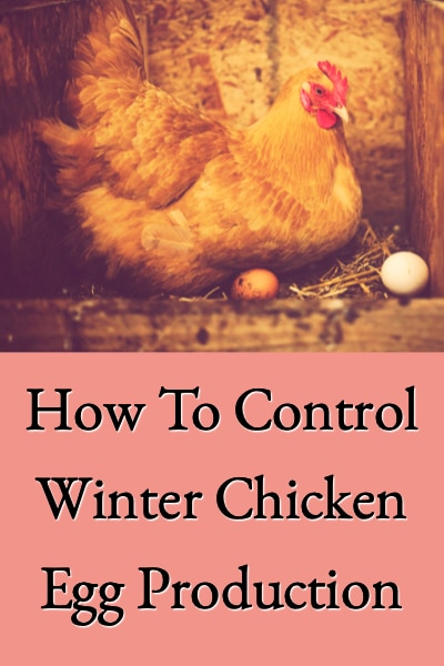 how-to-control-winter-chicken-egg-production