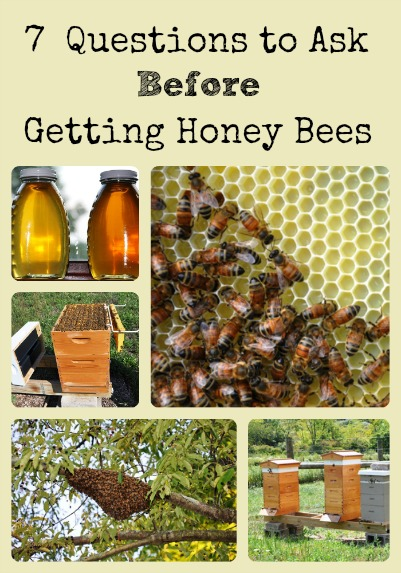 7 Question Before Getting Honey Bees via Better Hens and Gardens