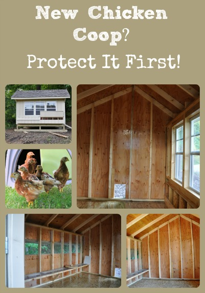 Coop Protection Collage via Better Hens and Gardens