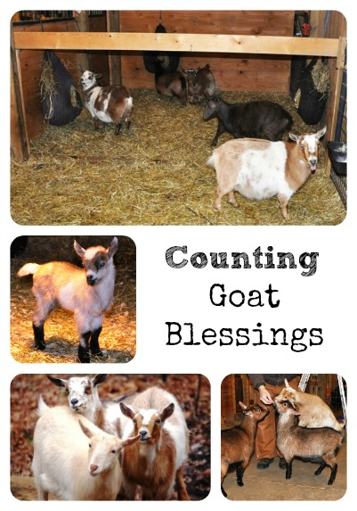 Goat Blessings Collage via Better Hens and Gardens