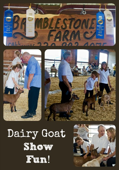 Goat Show Fun Collage via Better Hens and Gardens