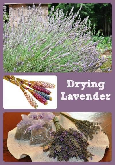 How To Dry Lavender via Better Hens and Gardens