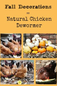 Fall Decorations = Natural Chicken Dewormer