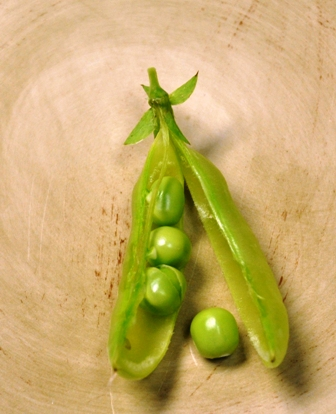 Growing Sugar Snap Peas