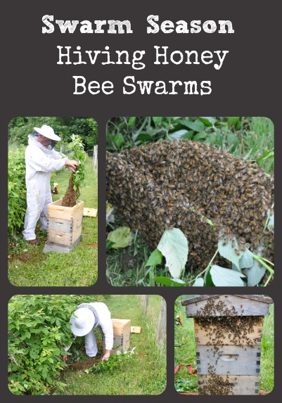 Swarm Season via Better Hens and Gardens