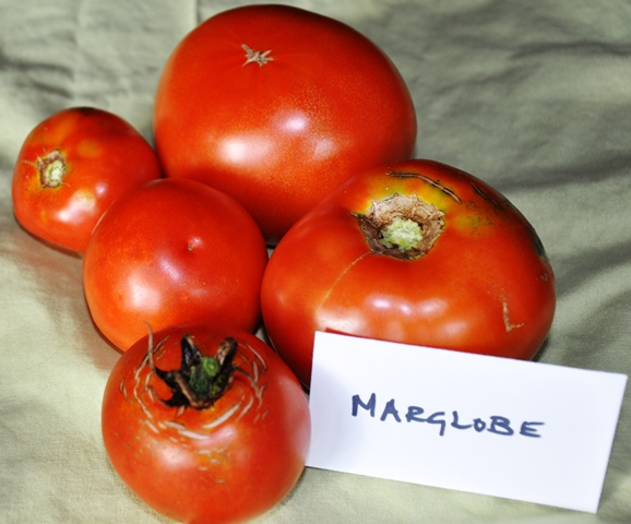 Tomato Comparison_Marglobe