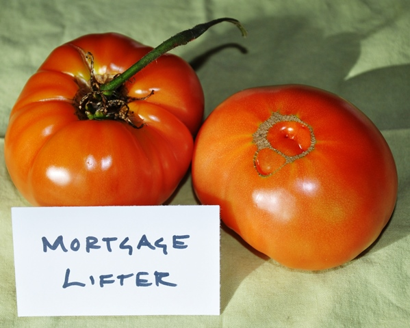 Tomato Comparison_Mortgage Lifter Large