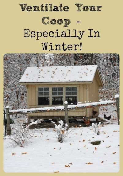 Ventilate Your Coop (Especially In Winter) via Better Hens and Gardens