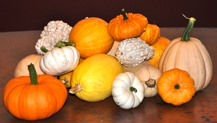 Decorative Fall Pumpkins & Gourds That Are Natural Dewormers